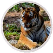 Round Beach Towel featuring the mixed media Amur Tiger 5 by Angelina Vick