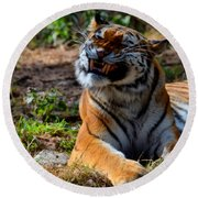 Round Beach Towel featuring the mixed media Amur Tiger 6 by Angelina Vick