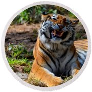 Round Beach Towel featuring the mixed media Amur Tiger 7 by Angelina Vick