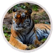 Round Beach Towel featuring the mixed media Amur Tiger 8 by Angelina Vick
