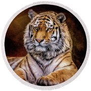 Amur Tiger Round Beach Towel by Brian Tarr