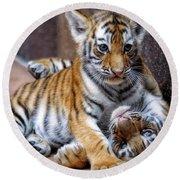 Amur Tiger Cubs Round Beach Towel