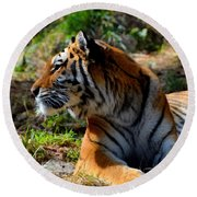 Round Beach Towel featuring the mixed media Amur Tiger 9 by Angelina Vick