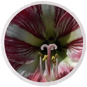 Round Beach Towel featuring the photograph Amaryllis Flower Close-up by Sally Weigand