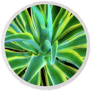An Agave In Color  Round Beach Towel