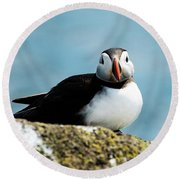 An Atlantic Puffin Round Beach Towel by MaryJane Armstrong