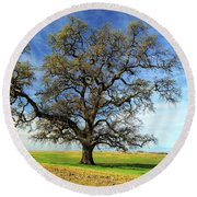 Round Beach Towel featuring the photograph An Oak In Spring by James Eddy
