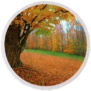 An Old Maple Tree In Autumn Color Round Beach Towel