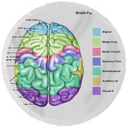 Anatomy & Functions Of Brain Round Beach Towel