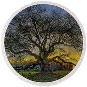 Ancient Live Oak Tree Round Beach Towel
