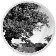 Ancient Oak, Bradgate Park Round Beach Towel by John Edwards