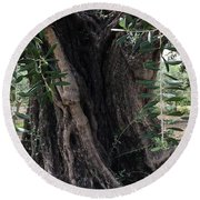 Ancient Old Olive Tree Spain Round Beach Towel
