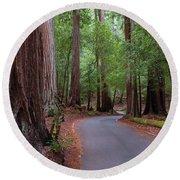 Ancient Redwoods Round Beach Towel