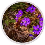 Round Beach Towel featuring the photograph Anemone Hepatiea #g3 by Leif Sohlman