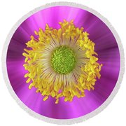 Anemone Hupehensis 'hadspen Round Beach Towel by John Edwards