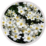 Round Beach Towel featuring the photograph Anemone Profusion by Will Borden