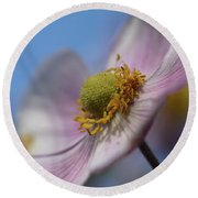 Anemone Tomentosa Close Up Round Beach Towel