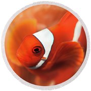 Anemonefish Round Beach Towel
