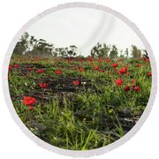 Round Beach Towel featuring the photograph Anemones Forest by Yoel Koskas