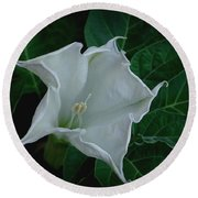 Angel Trumpet Opening Round Beach Towel