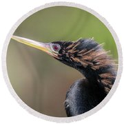 Anhinga Portrait Round Beach Towel