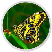Anise Swallowtail Butterfly Round Beach Towel