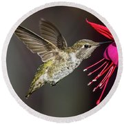 Anna Immature Hummingbird Round Beach Towel
