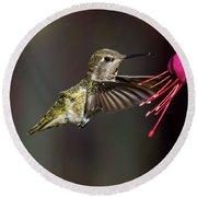 Anna Juvenile Hummingbird Round Beach Towel