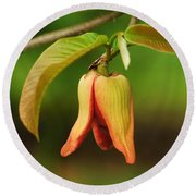 Annona Purpurea Flower Round Beach Towel