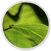 Ant Life Round Beach Towel by JT Lewis