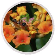 Round Beach Towel featuring the photograph Ant On Plant  by Richard Rizzo