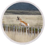 Round Beach Towel featuring the photograph Antelope Jumping Fence 1 by Rebecca Margraf