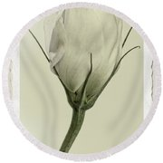 Antique Floral Showcard Round Beach Towel by Garry McMichael