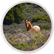 Appaloosa Mustang Horse Round Beach Towel