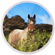 Appaloosa Mustang In The Wild. Round Beach Towel