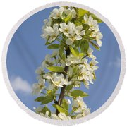 Apple Blossom In Spring Round Beach Towel
