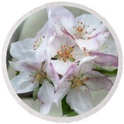 Round Beach Towel featuring the photograph Apple Blossoms From My Hepburn Garden by Chris Armytage