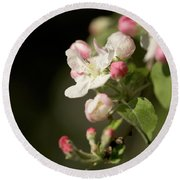 Apple Flower And Buds Round Beach Towel