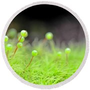 Apple Moss Round Beach Towel