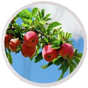 Round Beach Towel featuring the photograph Apples On A Branch by Elena Elisseeva