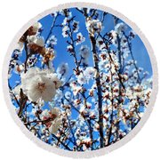 Round Beach Towel featuring the photograph Apricot Blossoms by Glenn McCarthy Art and Photography