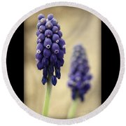 Round Beach Towel featuring the photograph April Indigo by Chris Berry