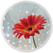 Round Beach Towel featuring the photograph April Showers Gerbera Daisy Square by Terry DeLuco