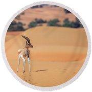 Round Beach Towel featuring the photograph Arabian Gazelle by Alexey Stiop