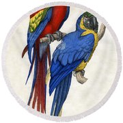 Aracangua And Blue And Yellow Macaw Round Beach Towel