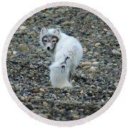 Arctic Fox Round Beach Towel by Anthony Jones