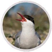 Arctic Tern - St John's Pool, Scotland Round Beach Towel