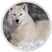 Arctic Wolf... Round Beach Towel