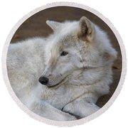 Arctic Wolf, San Diego Zoo Round Beach Towel