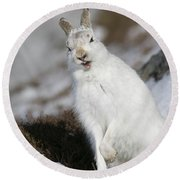 Are You Kidding? - Mountain Hare #14 Round Beach Towel